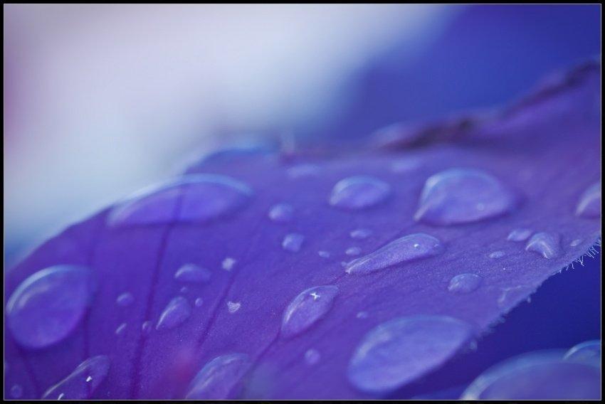 Watery Petal