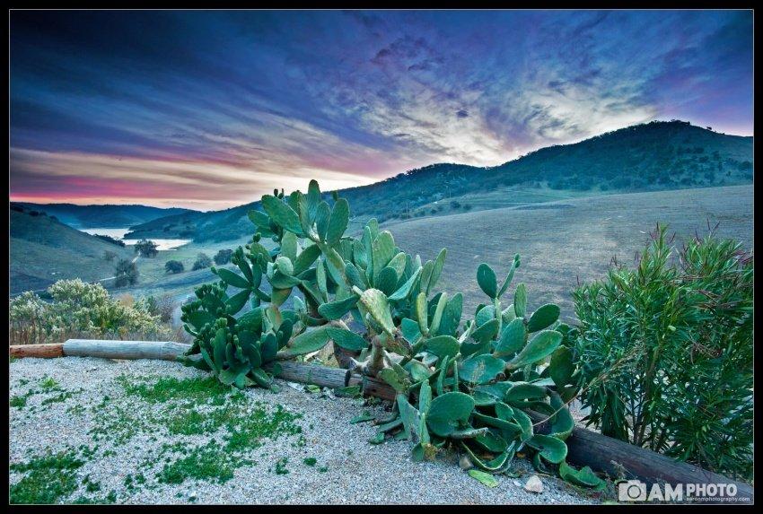 Firey Cactus