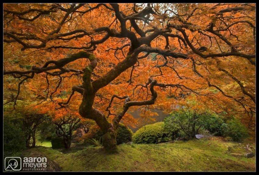 Autumn Zen [Artograph]